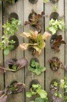 Как выращивать овощи в вертикальном положении